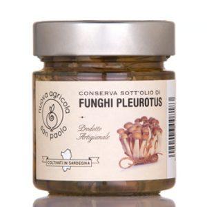 funghi-pleurotus